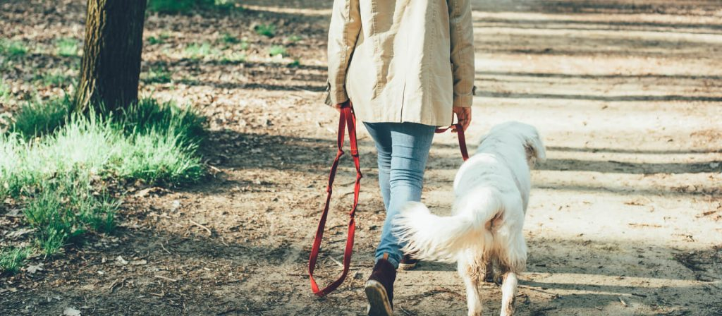 Importance of a Dog Walker